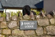 Pets at Barcud Lodge
