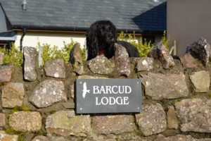 Pets at Barcud Lodge
